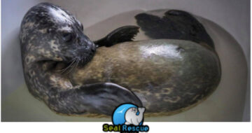 Seal rescue wexford