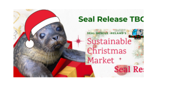 Christmas Stall Seal Rescue Courtown