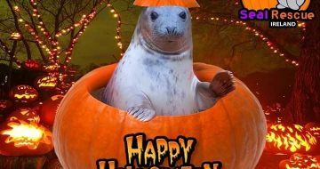 seal rescue halloween