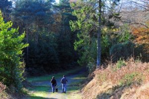 carrybyrne_hill_trail