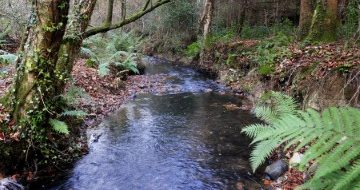 River in Woodland at Kilanerin