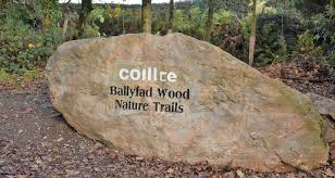 ballyfad_wood_walk