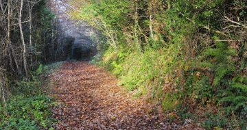 Kilanerin_Curragh_Woods_wexford_Walking_trail