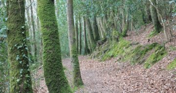 kellys_wood_wexford_walking_trail