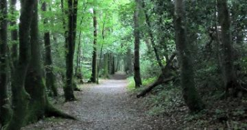 kellys-wood-walking-trail
